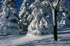 Winter Scene 1005