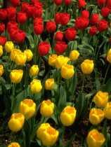 Flowers 0007