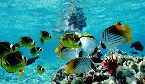 hawaii-snorkeling