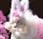 dogw-bunny-ears