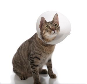cat-elizabethan-collar_0