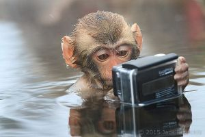 Baby-snow-monkey-taking-a-selfie-in-Nagano-Japan-by-Jack-Reynolds.