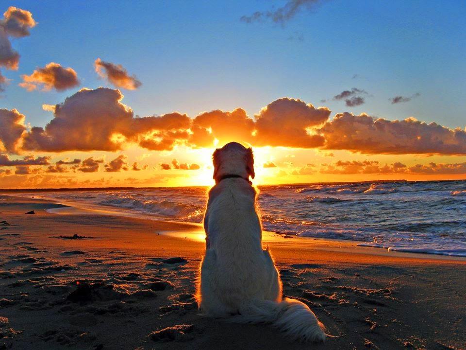 most_beautiful_sunrise_images