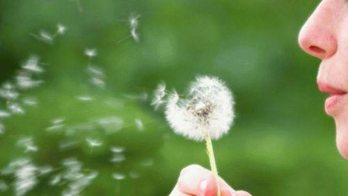 top-5-summer-allergy-triggers_980x551