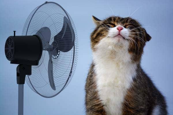 cat_fan_working_sm